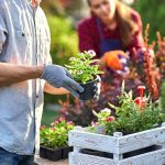 4 Eco-Friendly Gardening Ideas