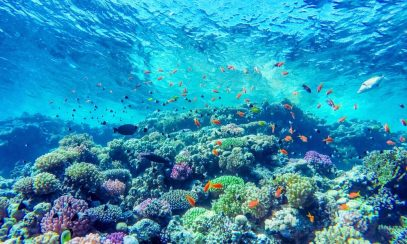 Top Reasons the Coral Reefs are Important