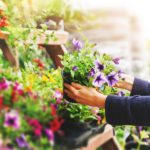 What Climate Change Means for Your Garden