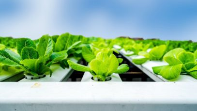 Tips for Beginner Hydroponic Gardeners