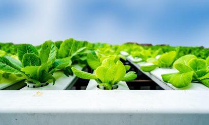 Tips for Beginner Hydroponic Gardeners
