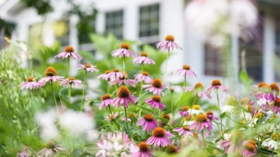 Tips for Creating a Bee-Friendly Garden