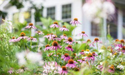 Tips for Creating a Bee-Friendly Garden