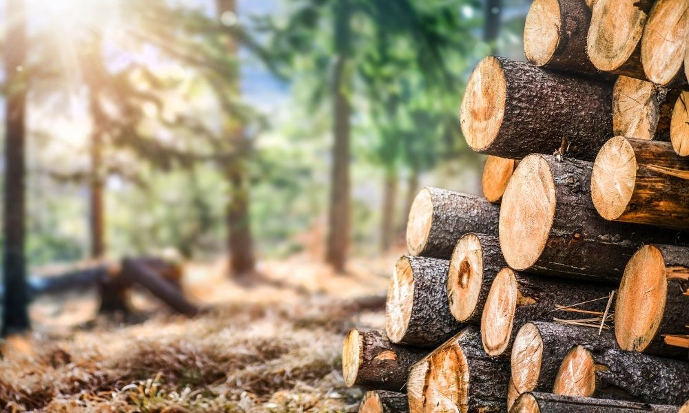 How Sustainable Wood Is Grown and Harvested
