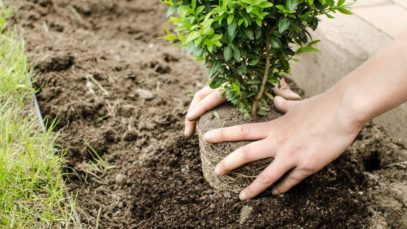 4 Crucial Things To Know Before Planting a Tree in Your Yard