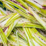 What Is Sugarcane Bagasse Used For?