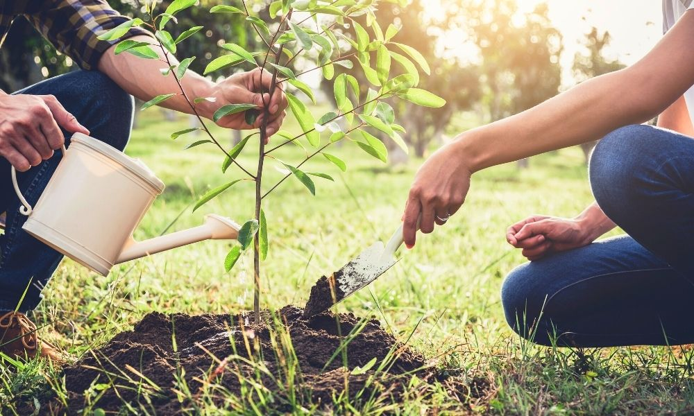 Helpful Equipment To Have for Planting Trees