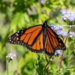 4 Ways To Make Your Backyard Wildlife-Friendly